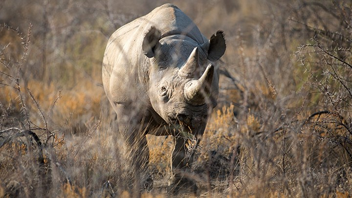 Namibia Crushes Anti-Hunters By Banning All Hunting Bans