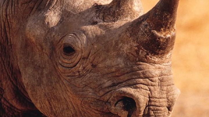 South Africa to Continue Rhino-Horn Trade Ban Despite Increase in Poaching