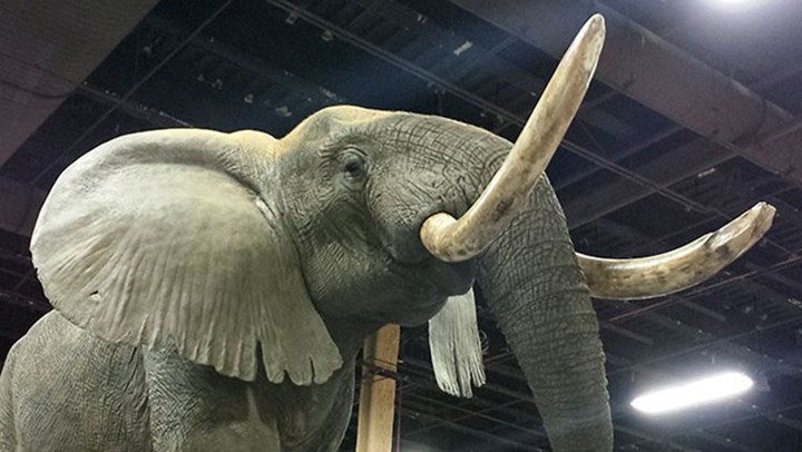 Kenya Conducts World's Largest Ivory Burn