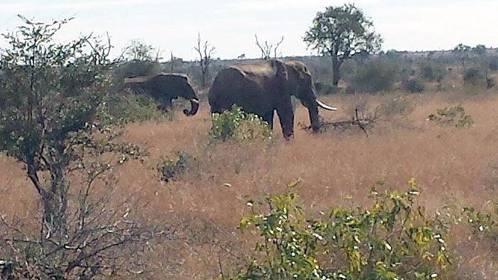 African NGO Stands with NRA to Fight Animal Rights Extremism
