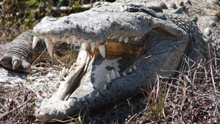 Australia Pushes Trophy Hunting for Crocs