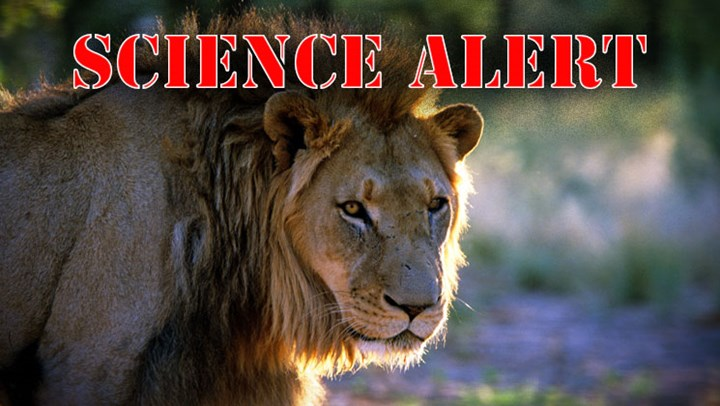 Scientists Finally Admit Cecil Wasn't Lured from Park
