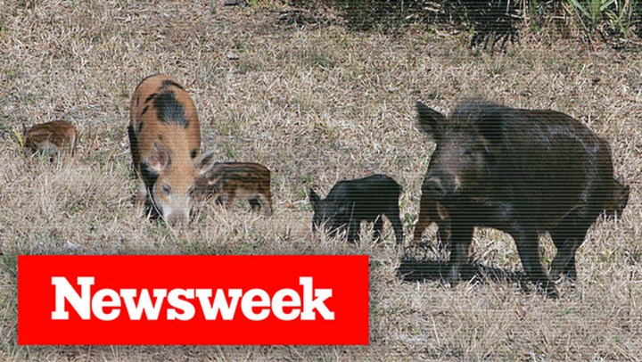Newsweek Sides with Hunters