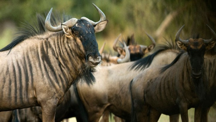 Photo Tourism Alone Cannot Save Africa's Wildlife