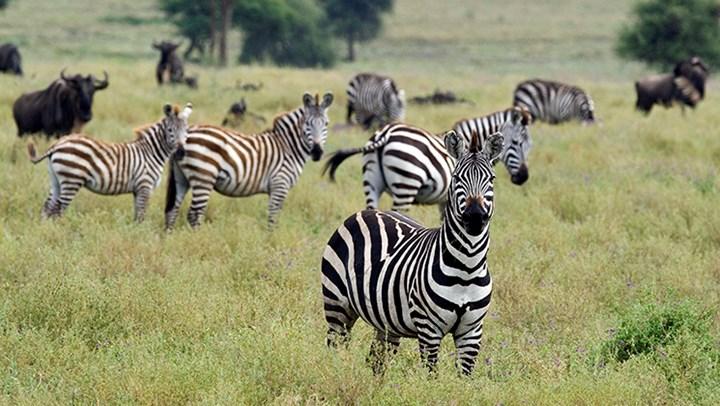 Botswana Hunting Ban Hurts African Wildlife and Economy