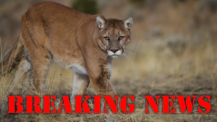 HSUS Defeated in Push for Arizona Cat Hunting Ban