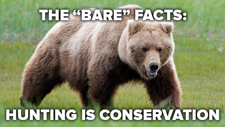 Washington Post Gets It Right on Wyoming Grizzly Bear Hunt