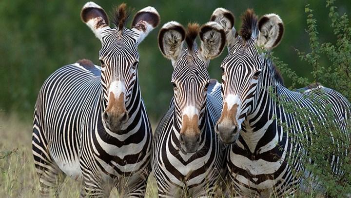 Kenya Runs Out of Space for Wildlife Habitat