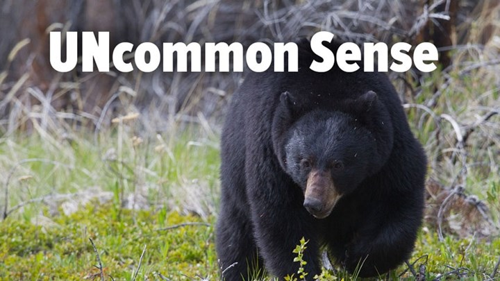 New Jersey Hunters Mobilize Over Governor's Bear Hunting Ban