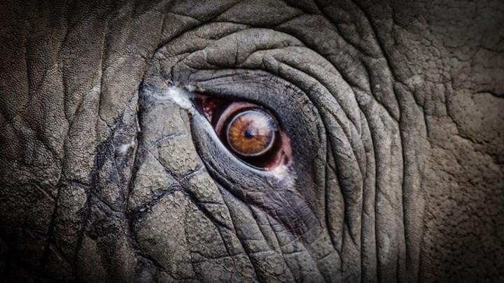 Animal Rights Group Seeks Personhood Status for Zoo Elephant