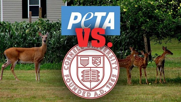 PETA to Cornell University: Deer over People!