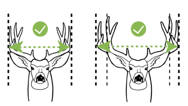 Texas Mule Deer Project Poised to Enrich All Hunters