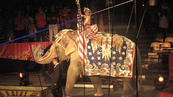 The Real Reason Behind the Jersey Circus Ban