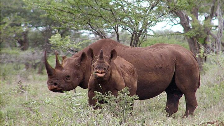 Two Suspected Rhino Poachers Killed in Botswana