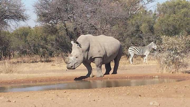 Poachers Assassinate Rhino Poaching Investigator in South Africa