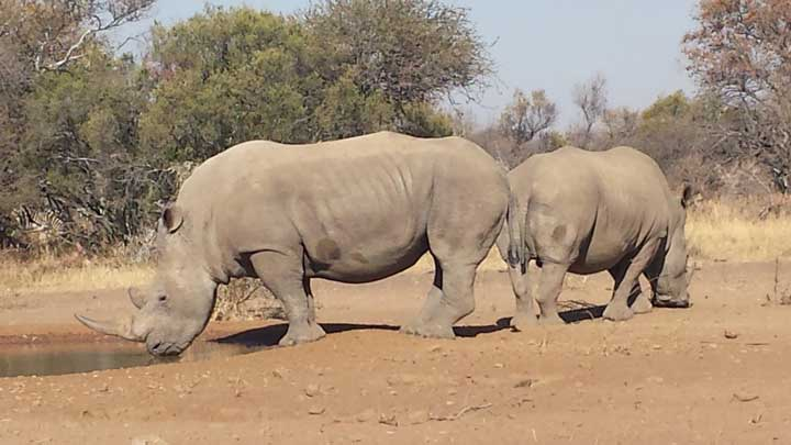 Rhino poachers killed the top rhino poaching investigator in South Africa, Lt. Col. Leroy Brewer. (Image by Phil Phillips.)