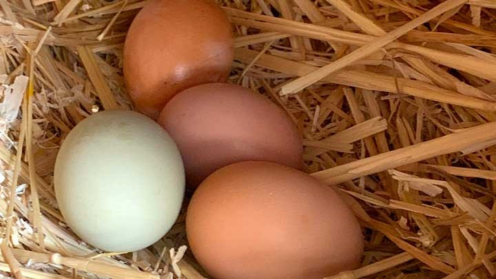 Green Eggs and Hunt: Examining Hunting's Role in Nature and Humanity