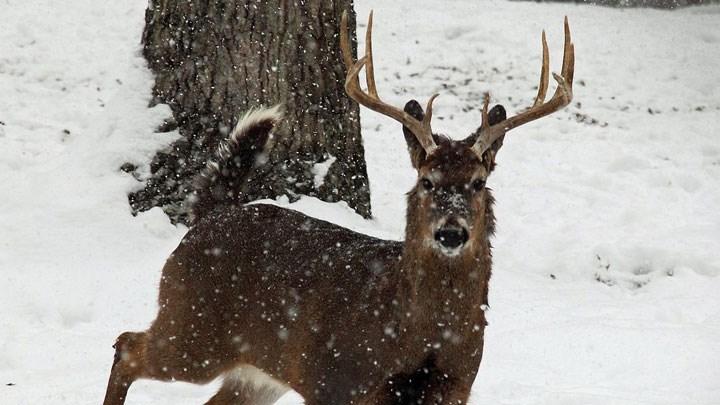 Wisconsin Hunters Vote No to Deer Season Change, Yes to Bear Season