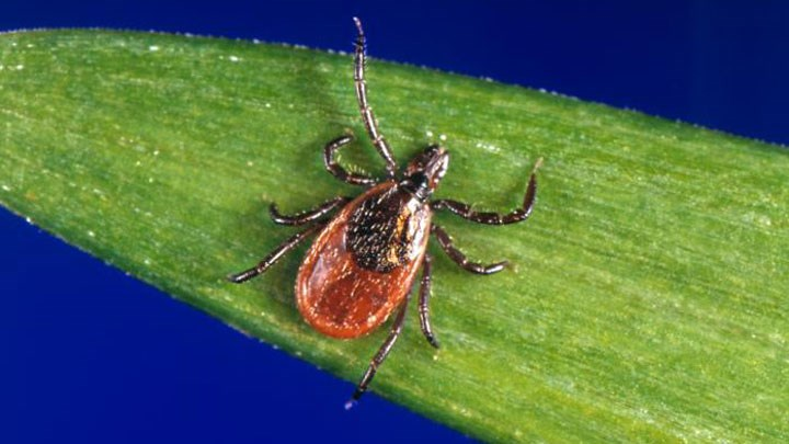 Is Your Summer Flu Actually Lyme Disease?