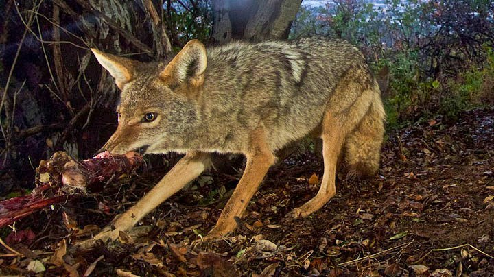 Maine Anti-Hunters Target Hunters with Petitions to Protect Predators