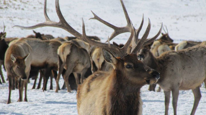 2020 Marks Successful Elk Hunting Season in Wisconsin