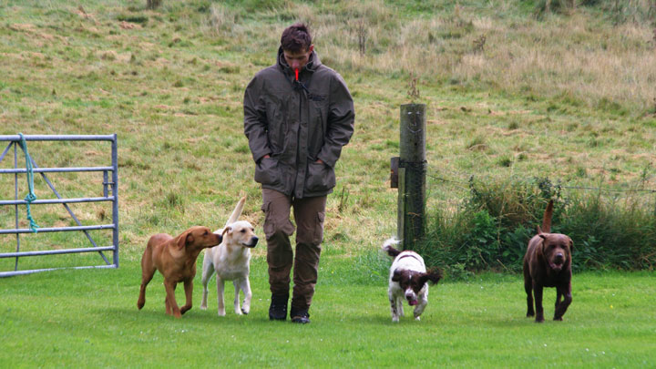 trainer with hunting dogs
