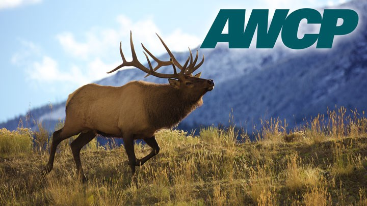 American Wildlife Conservation Partners Celebrate 20 Years of Conservation Success