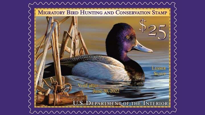 Biden Administration Axes Hunting Theme Requirement for Federal Duck Stamps