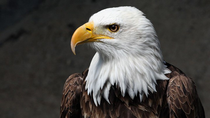 Eagle Eyes: 10 Anti-Hunting Groups to Watch